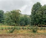 Aaron Blum: The Garden, 2010