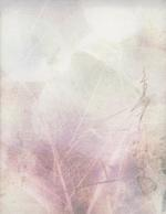 Chaco Terada: Veil for Memories