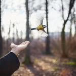 Cig Harvey: Goldfinch, St. Petersburg, Russia, 2014