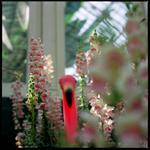Colleen Plumb: Flamingo, 2000