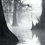 David H. Gibson: Knee Reflections, Mill Pond, Caddo Lake, Texas, 1988