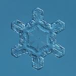 Douglas Levere: Snowflake 2015.02.25.008