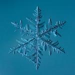 Douglas Levere: Snowflake 2014.02.23.009.1