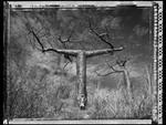 Elaine Ling: Baobab, Tree of Generations #26, 2010