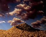 Ernie Button: Grape Nuts Dune #9, 2005