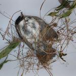 Hiroshi Watanabe: TDTDC 24 (Dead Bird), 2011