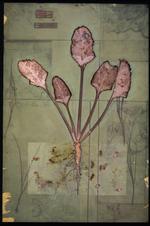 James Hajicek & Carol Panaro-Smith: Earth Vegetation Composite/04-17, 2004