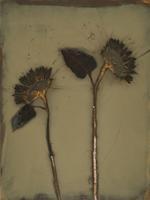 James Hajicek & Carol Panaro-Smith: Sunflower/07-12, 2007