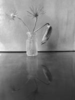 James Pitts: Climatis bud in Tiny Frosted Antique Bottle with Reflection