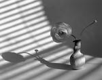 James Pitts: Ranunculus and Bud in First Sculpey Vase Shadows