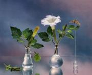 Jo Whaley: Botanical Studies