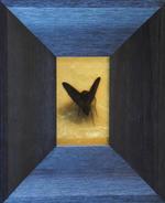 Kate Breakey: Black Moth