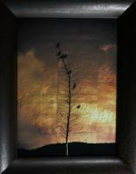 Kate Breakey: Seven Finches on Yukka