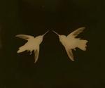 Kate Breakey: Pair of Hummingbirds