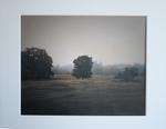 Kate Breakey: Tree in the Mist, Plum Creek, Texas