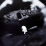 Keith Carter: Fallen Giant