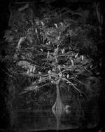 Keith Carter: Nesting Tree, 2012