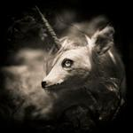 Keith Carter: Monocerus, 2018