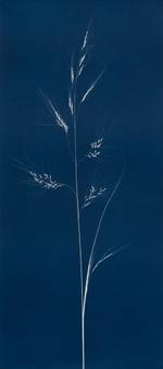 Max Kellenberger: Grass #11, 2013