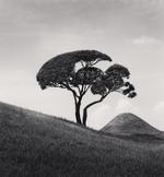 Michael Kenna: Tree and Mountain, Kumamoto, Kyushu, Japan, 2002