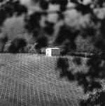 Michael Kenna: Pietrantonj Vineyards, Vittorito, Abruzzo, Italy 2016
