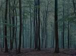 Michael Lange: WALD | Landscapes of Memory #0172