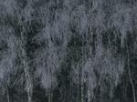 Michael Lange: WALD   Landscapes of Memory #3515
