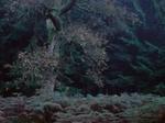 Michael Lange: WALD | Landscapes of Memory #1825