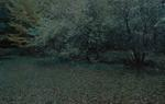 Michael Lange: WALD   Landscapes of Memory #2961