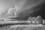 Mitch Dobrowner: Storm, Field and Trees, 2017