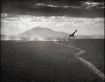 Nick Brandt: Giraffe Running on Lake Bed, Amboseli 2010