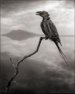 Nick Brandt: Calcified Songbird, Lake Natron 2010