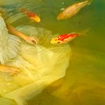 Tom Chambers: Catching Koi